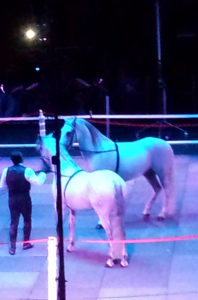 Andalusians at the Gala of Royal Horses